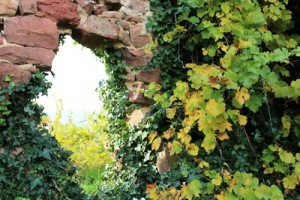 Immobiliengutachter Weingarten